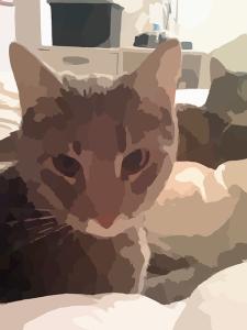 cat-41791_640