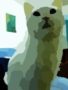 cat-48974_640
